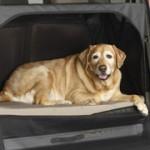 Honda Element a misura di cane